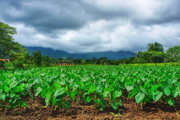 Green farms of La Fortuna