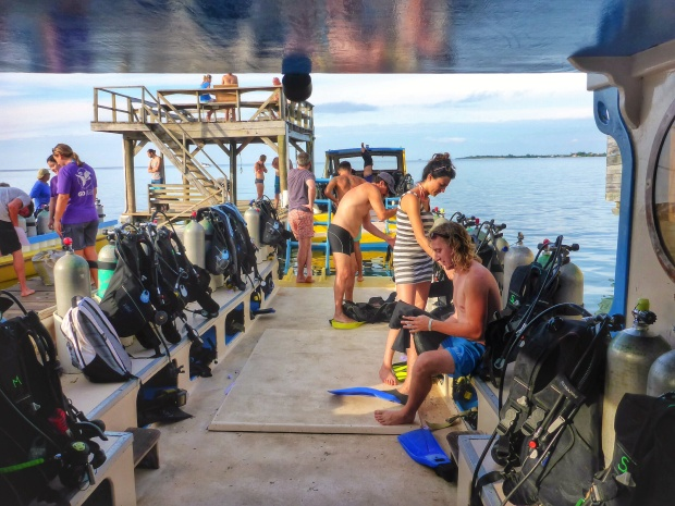 Getting ready for morning dive